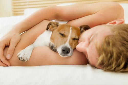 pet-sleeping-in-your-bed-pros-and-cons-comfort-and-bonding