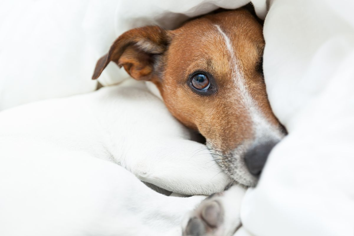 Pet Sleeping in Your Bed – Pros and Cons