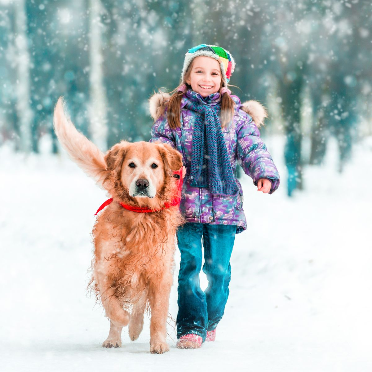 Winter is Coming – Pets on Snow