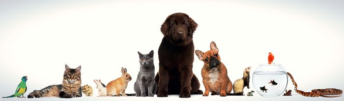 list-of-pets