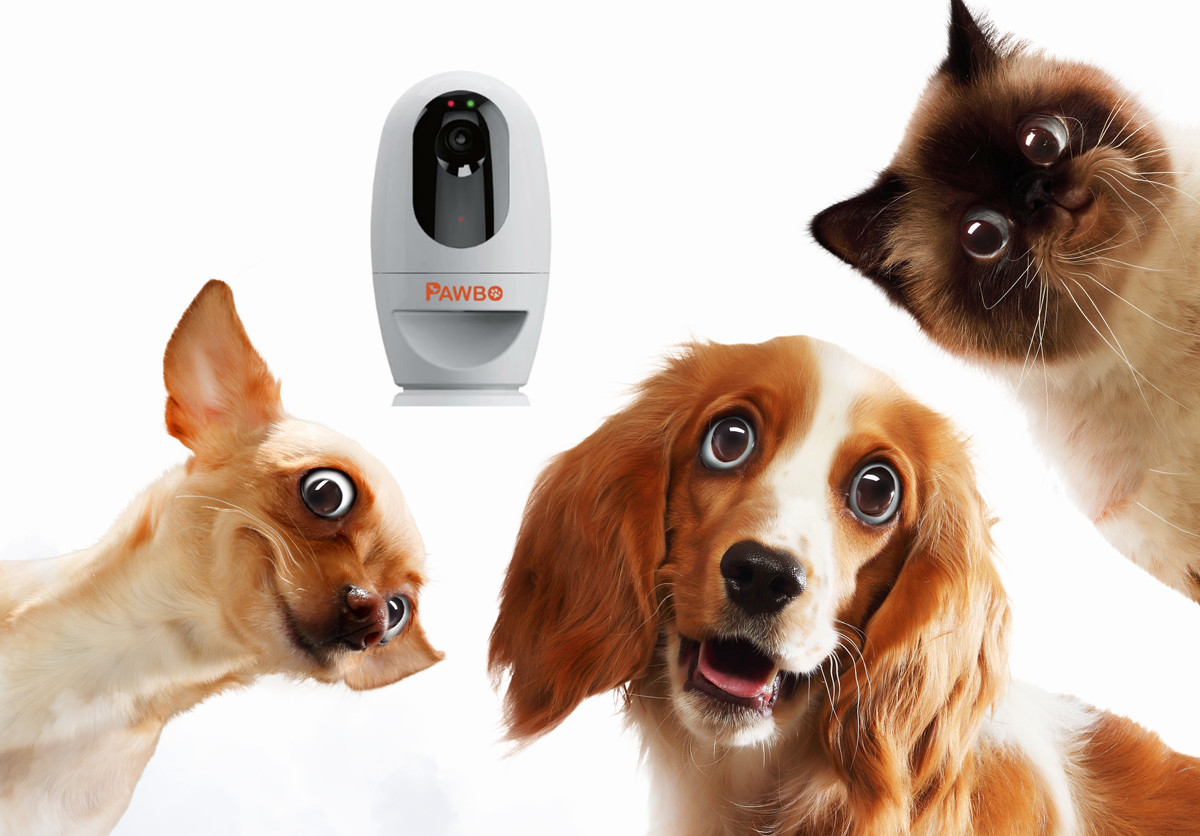 Best Pet Cameras in 2017 – Top 10