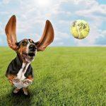 Best Dog Ball Launcher Reviewed