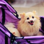 Best Pet Strollers Reviewed