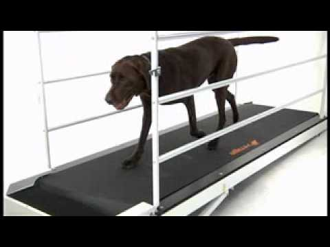 PetRun PR730 Dog Treadmill