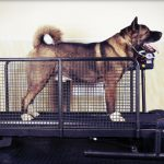 Best Dog Treadmills Reviewed
