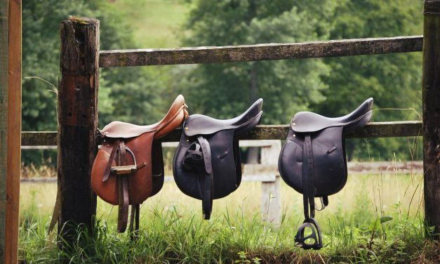 Best Horse Saddles Reviewed