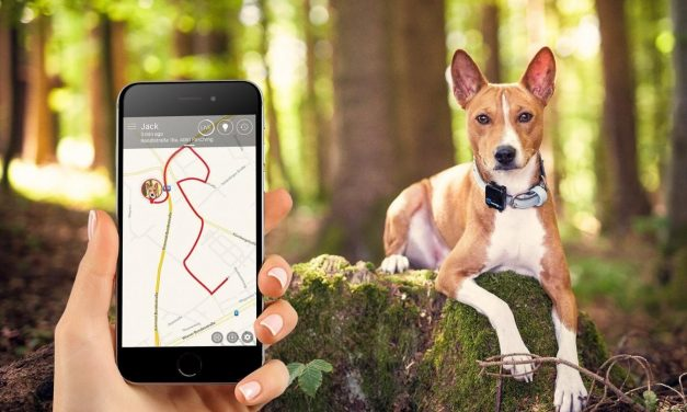 Best GPS Pet Trackers Reviewed