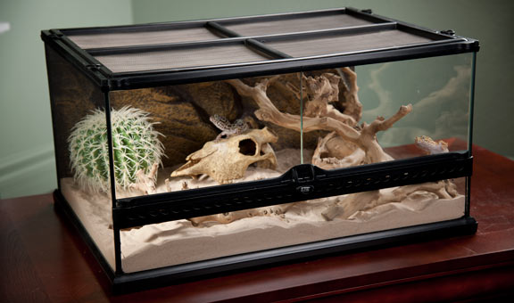 Best Reptile Terrariums Reviewed Mycuddlybuddy